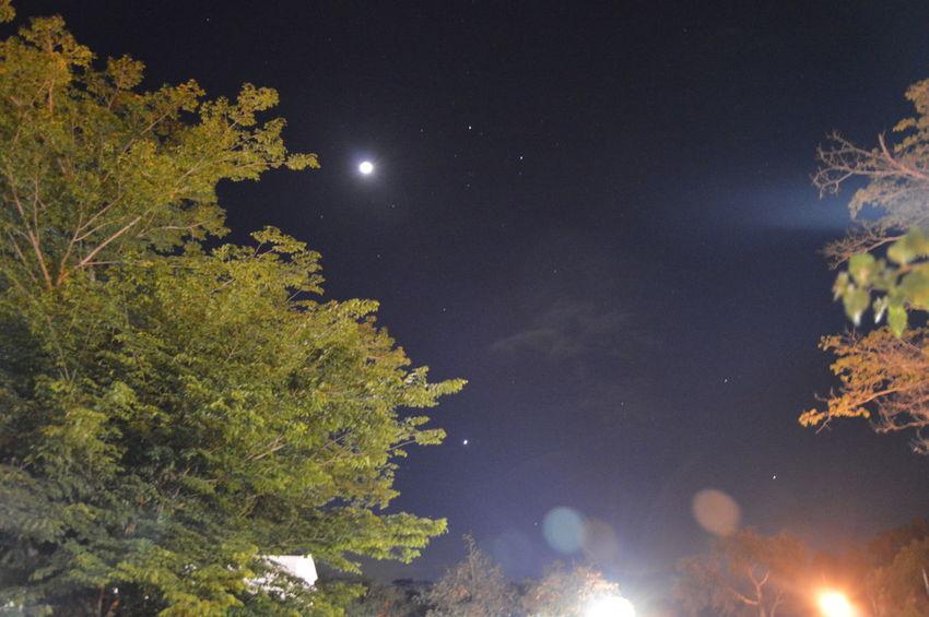 Experimenting with night sky photography Philippines Eyeem Philippines Sky Night Tree Star - Space Moon Illuminated Moonlight