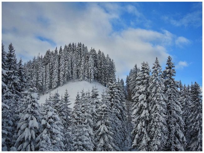 Beauty In Nature Cloud - Sky Cold Temperature Coniferous Tree Day Forest Growth Mountain Nature No People Outdoors Scenics Sky Snow Tranquil Scene Tranquility Tree Winter