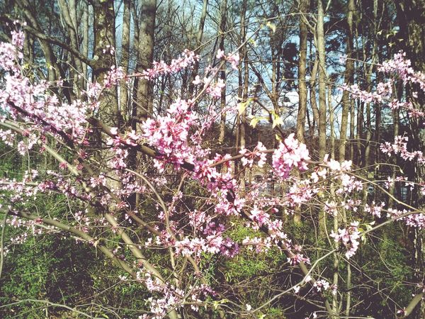 Beauty among poision. Polluted Theae flowers were in bloom in a thicket of trees right off of the freeway.