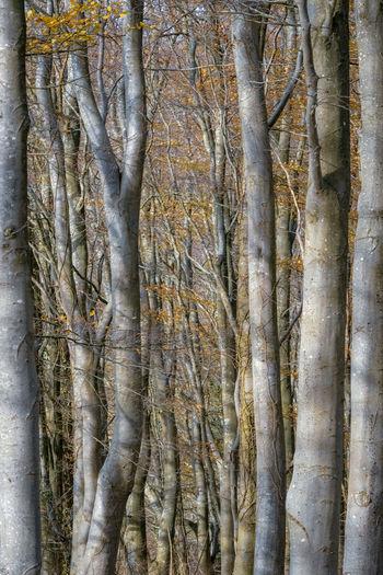 Full frame shot of tree trunk in forest