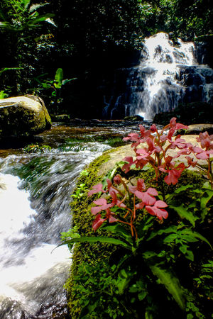 Mun dang waterfall 5th floor 2 Water Nature Beauty In Nature No People Outdoors Plant Motion Flower Day Scenics Tree Freshness Close-up Flower Head Growth Snapdragon Wild Flowers EyeEmNewHere The Week On EyeEm Freshness Vacations Beauty In Nature Rock - Object Waterfall Nature