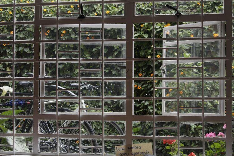 Greenhouse Flower Plant Nursery Window Tree Plant Window Box Potted Plant Window Frame Botanical Garden Window Sill Shelves Grid
