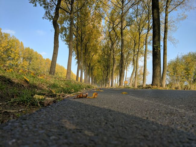 Tree Road Nature Outdoors Sunlight No People Day Growth Scenics Beauty In Nature Sky Brugge Belgium Travel Pixel By Google