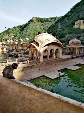 Jaipur Monkey Monkeytemple Lake View India Rajasthan Water Tree Sky Architecture Built Structure Building Exterior The Great Outdoors - 2018 EyeEm Awards The Traveler - 2018 EyeEm Awards The Architect - 2018 EyeEm Awards