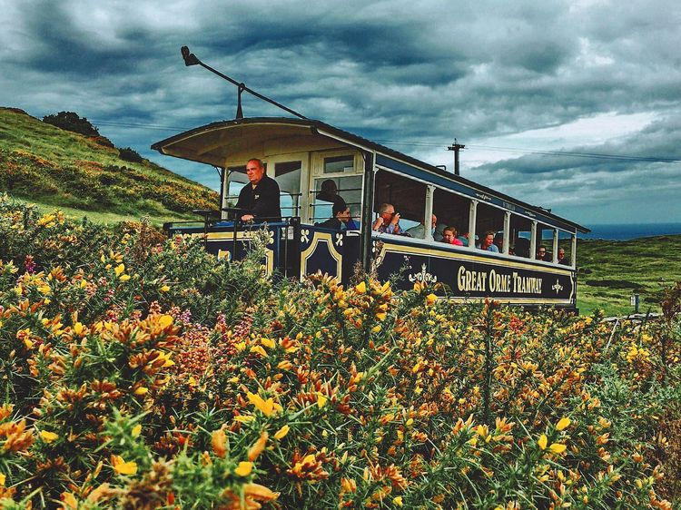 Flower Cloud - Sky Transportation Growth Leisure Activity Mode Of Transport Nature Beauty In Nature Plant Scenics Freshness Park - Man Made Space Cloudy Tranquility Sky Day In Front Of Great Orme tram Tranquil Scene Storm Cloud