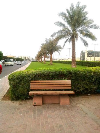 LetsSitAndTalk Trees And Nature Bench No People Green Color Nature Tree Day Plant