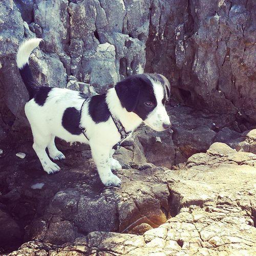 Dog Cane Canemeticcio Meticcio