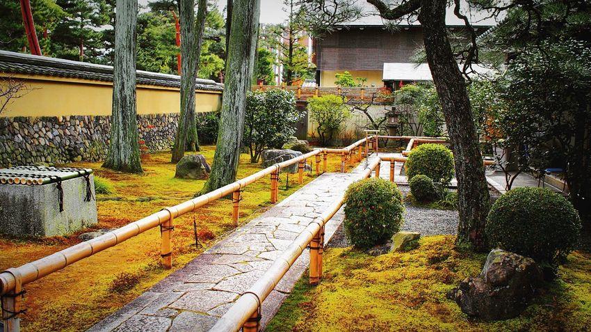 養源院 相国寺 Kyoto Temple Kyoto,japan Japanese Garden Japan Photography Tree Built Structure Architecture Outdoors Water No People Day Travel Destinations Growth Beauty In Nature