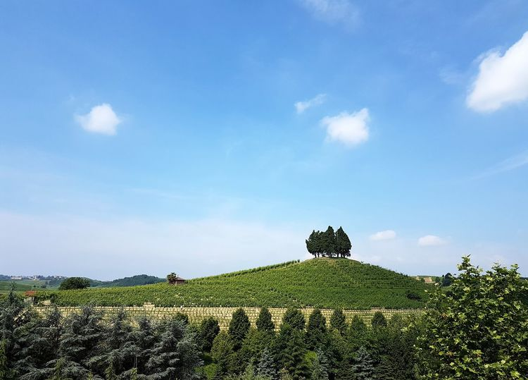 Cloud - Sky Nature Growth Beauty In Nature Plant Sky Outdoors No People Day Piedmont Italy Langhe Roero Vineyard Trees