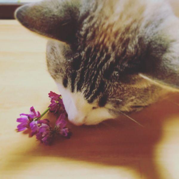 Animals Neko Cat Cats Cat♡ Manekineko