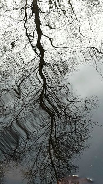 Pattern Tree Nature Concentric Outdoors Beauty In Nature Landscape Water No People Close-up Reflection Lake Hobby Photography Samsungphotography Lake Water_collection Waves