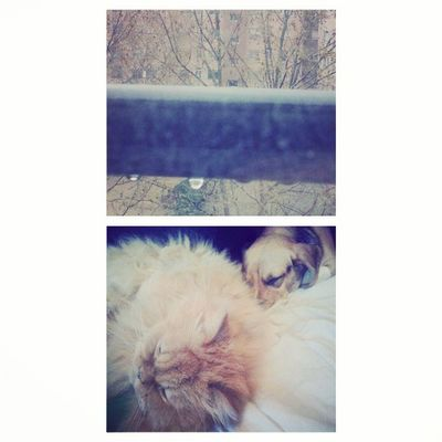 Lluvia + deberes... Los animalitos si q viven bien!!! RainyDay SiestaTime MisBebes Amores  hada kiffy love instapets instapicframe instacollage beaglestagram