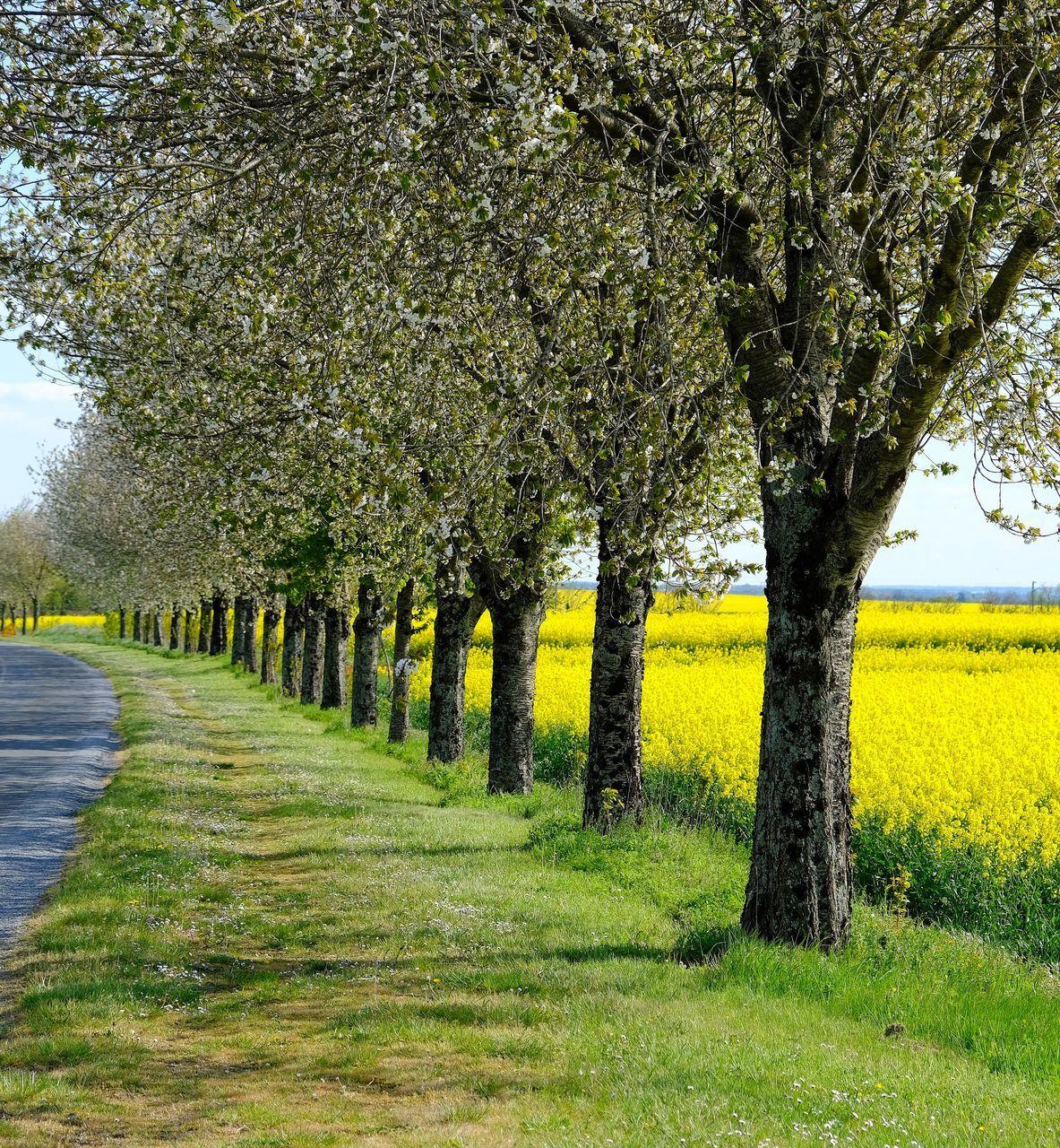 TREES ON FIELD BY PLANTS