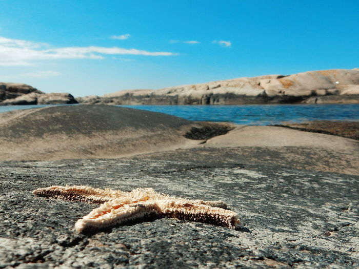 Close-up of starfish by river against blue sky on sunny day