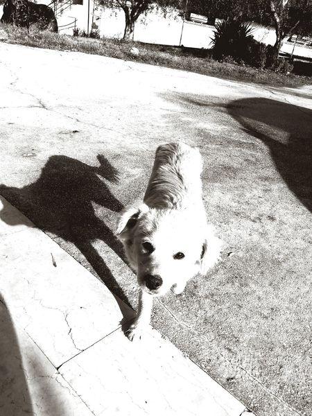 Mydog♡