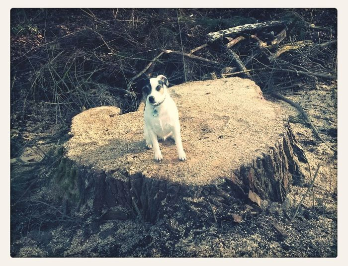 uhm - where's the tree? A Dog's Life Trees Dog Gone With The Saw
