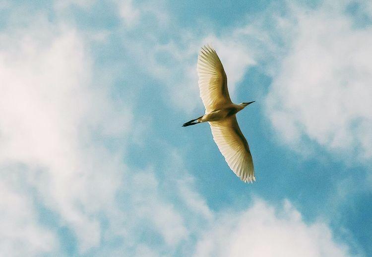 Wings Bird