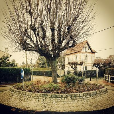 Ermont France Tree