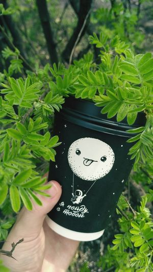 Coffee Green Coffee Green Human Hand Leaf Close-up Plant Green Color Human Finger Finger