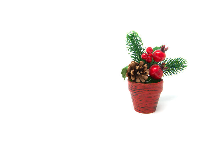 Christmas Decoration Studio Shot White Background Food Healthy Eating Cut Out Copy Space Food And Drink Indoors  Plant No People Wellbeing Freshness Berry Fruit Fruit Red Strawberry Nature Still Life Growth Potted Plant Flower Pot