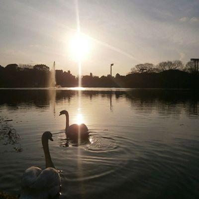 おつかれさま✨ 今週末まで、鳥ショットが多いのです。 #ic_water #ic_water_birds #insta_crew