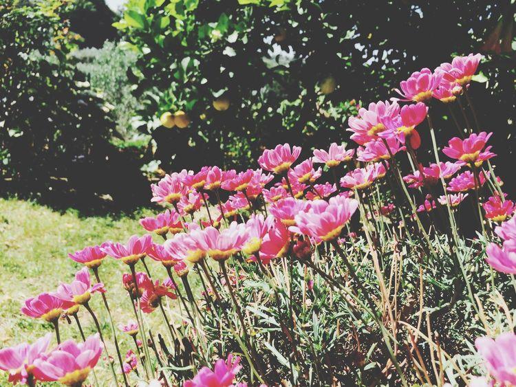 Beautiful Nature #rose #beauty #nature #flower #love #eyeem #sun Like Sun Nature Collection ❤️?