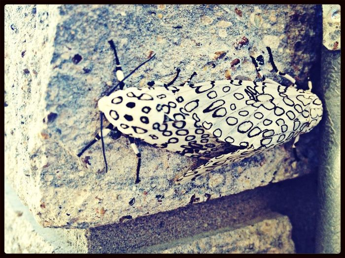 Moth Lyfe