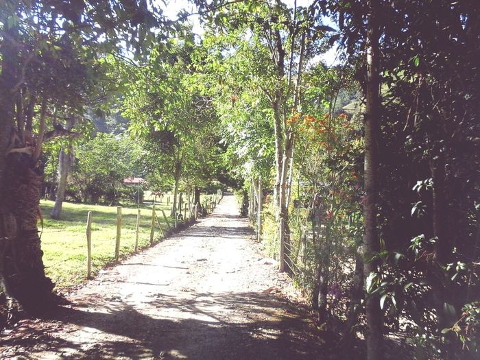 Camino Walking Around Way Natural Way