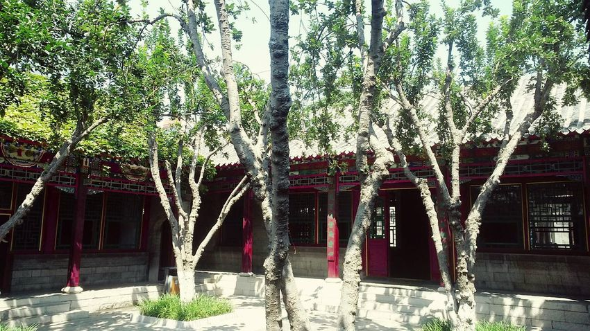 Enjoying Life On The Way Traditional Structure Chinese Red Courtyard House Trees Summer Views Urban Photography Old House BEIJING北京CHINA中国BEAUTY
