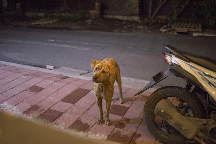 Animal Themes One Animal Outdoors Wild Dog