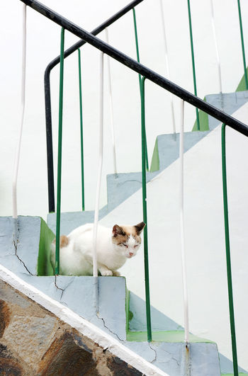 Portrait of a cat on stairs