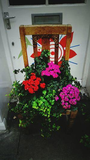 Flower Close-up Flowerontheroad Chair Covent Garden  LONDON❤ Architecture WeekOnEyeEm Colorful Special👌shot Popular Photos Urban Loveit 2017 Year EyeEm Team Check This Out The Week On EyeEm EyeEmNewHere