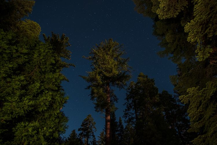 Enveloped Tree Night Star - Space Astronomy Plant Space Beauty In Nature Nature Space And Astronomy Scenics - Nature No People Tranquil Scene Galaxy Low Angle View Star Field Constellation Star Sky Tranquility Growth