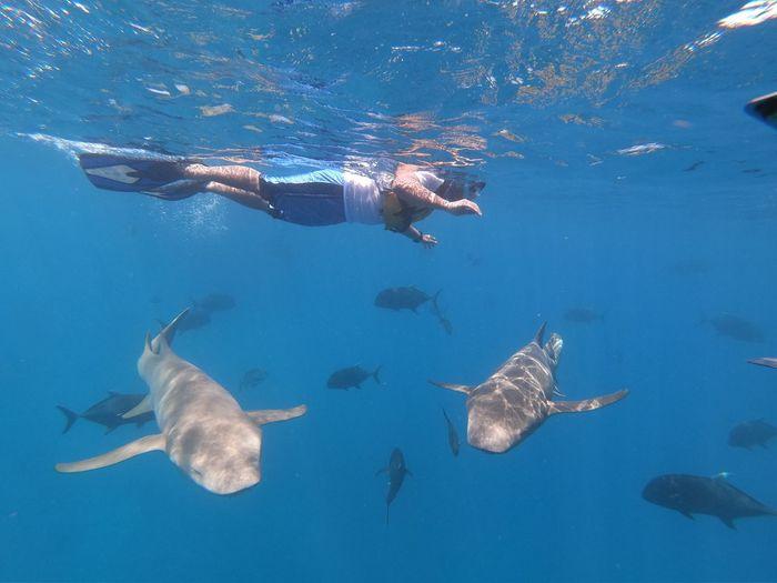 Snorkeling Shark Underwater Sea Swimming Water Animal UnderSea Animal Themes Animals In The Wild Sea Life Vertebrate Adventure My Best Photo