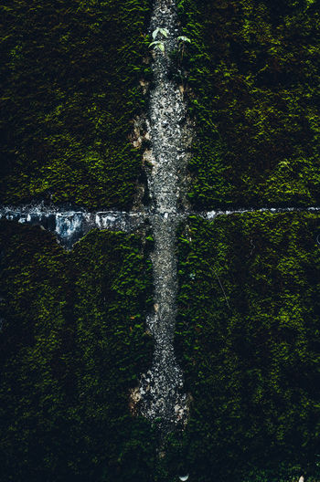 Cross Abstract Moss Green Color Green Water Plant Tree Nature Motion Day Land No People Forest Outdoors Beauty In Nature Scenics - Nature Growth Splashing High Angle View Environment Animal Tree Trunk Purity Rainforest My Best Photo