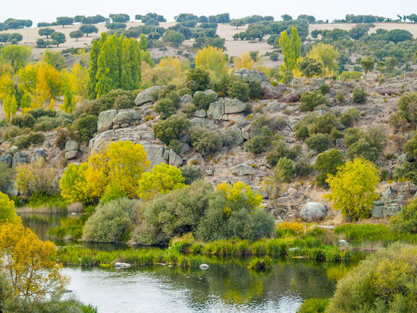 Autumn Autumn Colors Autumn Leaves EyeEm Selects Landscape_Collection Reflection River View Riverside Rock Formation Rocky Rural Water Reflections Beauty In Nature Change Environment Fall Forest Landscape Nature Outdoors River Rural Scene Scenics Tree Water