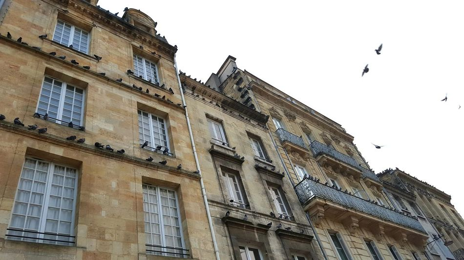Architecture No People Outdoors Bird Day Flying Flock Of Birds Façade Bordeaux Old Stone Houses Low Angle View Adapted To The City France