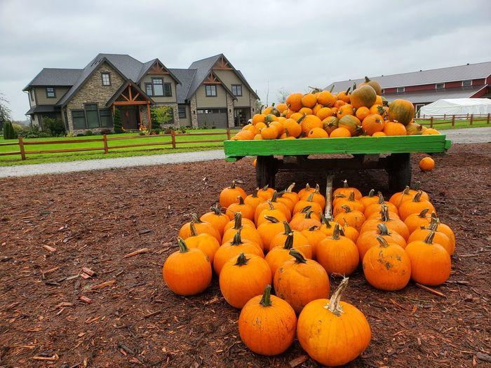 Pumpkins in house against orange sky