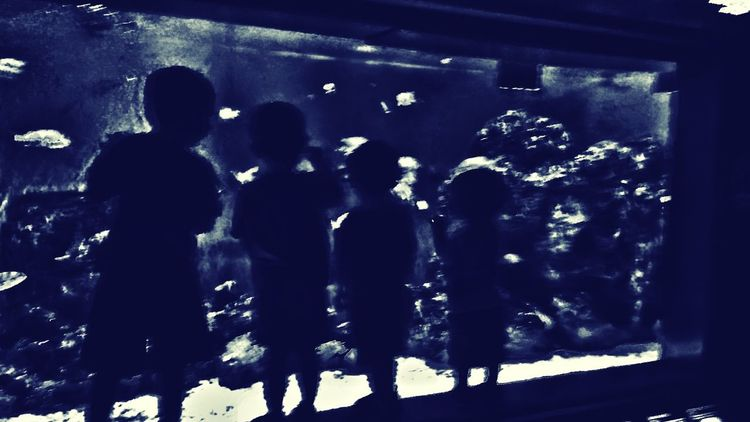 Tranquil Scene Leisure Activity Tranquility Water Aquarium Kids Boys Boys Boys Boys Will Be Boys Family❤ Blue Wave
