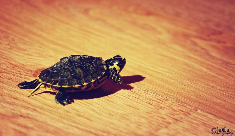 Chucky - I ♥ Turtles  <3 Animals Pet Portrait Pet Photography