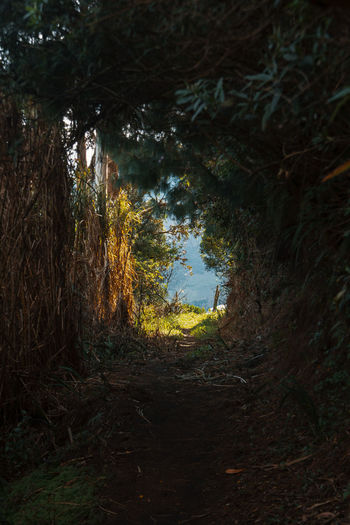 Just wandering around in the surrounding mountains of Banos. Tree Plant Land Nature No People Day Travel Destinations Explore Adventure Remote South America Latin America Forest Direction Trail Walking Branch Non-urban Scene Outdoors Growth Footpath Tranquility The Way Forward Circle Idyllic