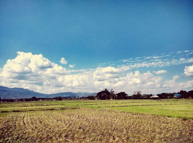 EyeEm Selects Cloud - Sky Agriculture Landscape Tranquility Field Beauty In Nature Nature Blue Sky Tree No People Scenics Day Rural Scene Food Outdoors Freshness Fragility