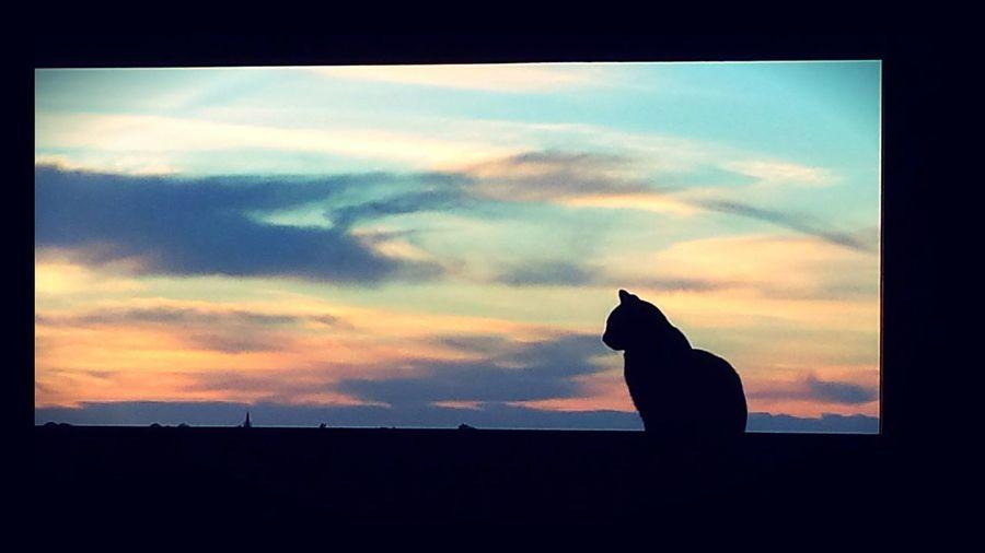 Sunset #sun #clouds #skylovers #sky #nature #beautifulinnature #naturalbeauty #photography #landscape Pornsky  Black Cat Portrait My Best Photo 2016 An Other Black Cat Magic Moments