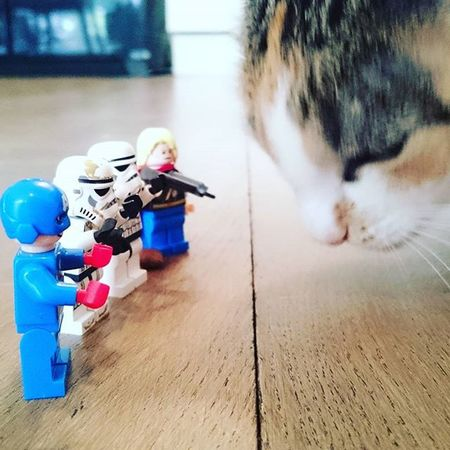 You shall not pass!!! LEGO Fun Toys Cat Pictureoftheday Catworld Worldofcats Instamoment instacat Thedailykitten Mycat Catphoto Ilovecats