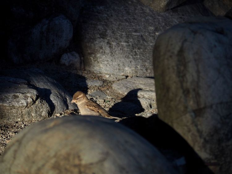 Beach Bird Cave Close-up Day Nature Nature No People Outdoors Rock - Object Selective Focus Shadows & Lights Textured