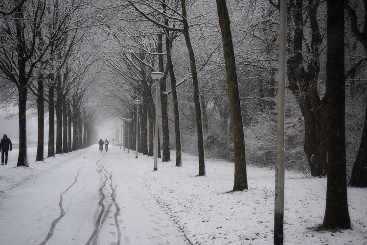 People walking on snow covered road amidst bare trees