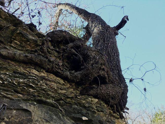 IPhoneography EyeEm Nature Lover Eye4photography  Nature Trees Rock EyeEm Winter Creekside Enjoying Life