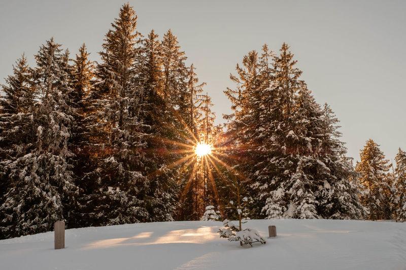 Sunstar Into