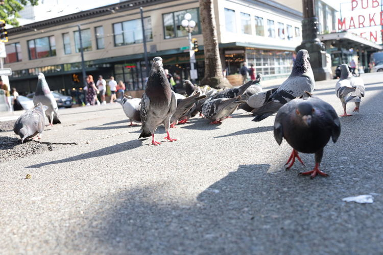 View of pigeons on street in city