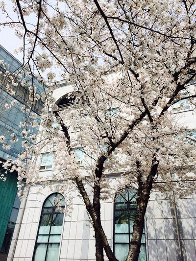 blossoms <3